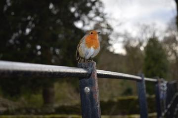 Red Robin Windermere