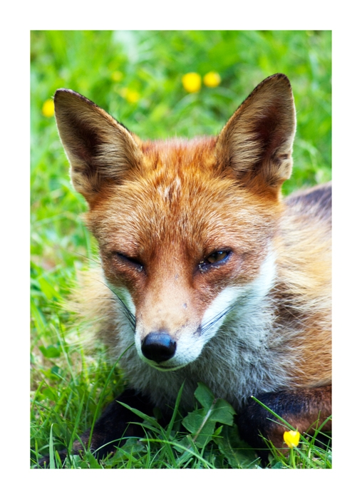 Henrietta Fox