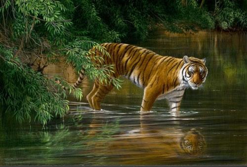 Jungle Odysey