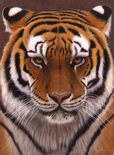 Intense(Siberian Tiger)