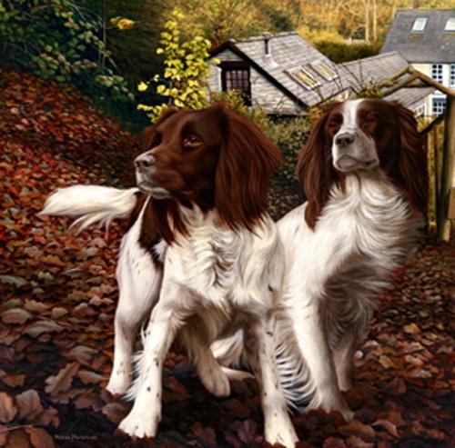 Autumn Watch - Springers