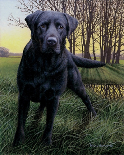 Black Watch - Black Labrador