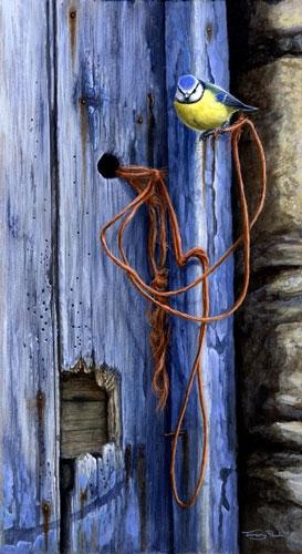 Doors - Blue Tit