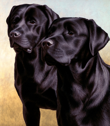Two of a Kind - Black Labradors