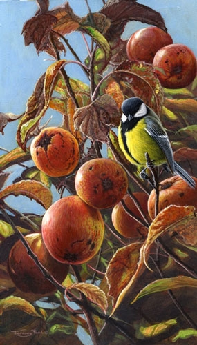 Crab Apples with Great Tit