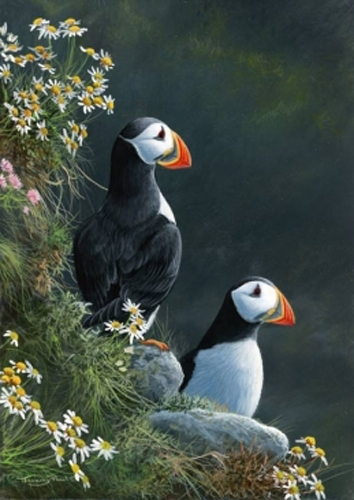 Puffins - Peel Hill