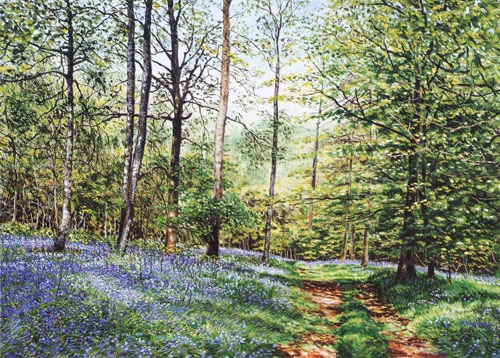 BlueBells,Cuckoo Coppice11