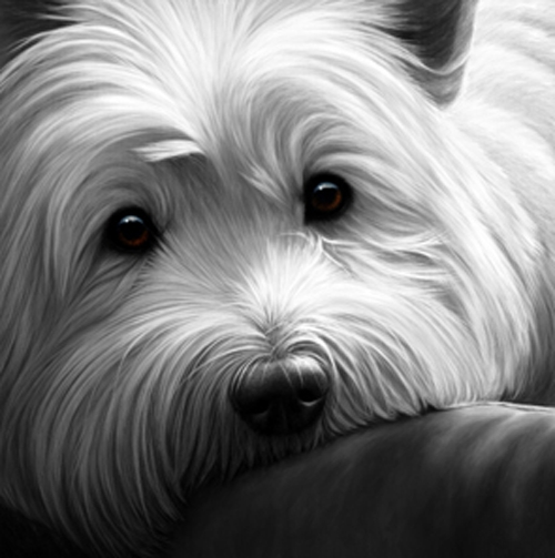 Dog Tired - West Highland Terrier on Canvas