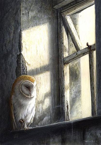 Barn Owl - Window Light