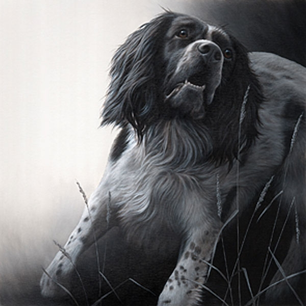 Field Sports - Springer Spaniel Canvas