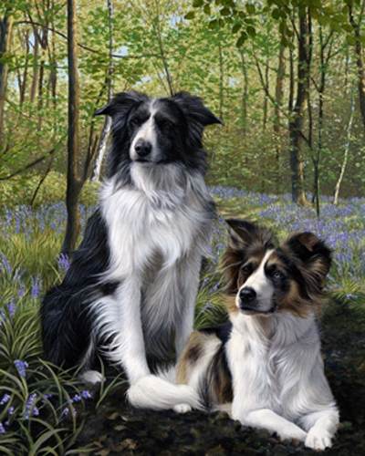 Blue's and Two's - Collies