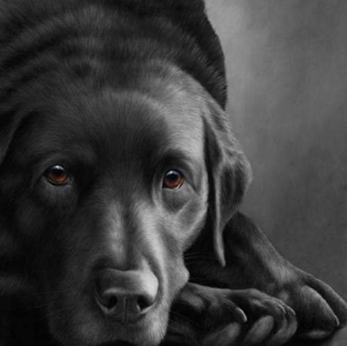 Dog Tired- Black Labrador