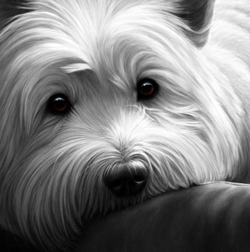 Dog Tired - Wessex Highland Terrier