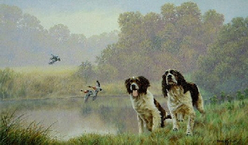 Water Sports - Springer Spaniels