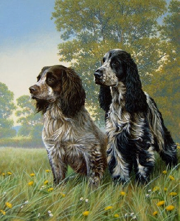 Cocker Two - Cocker Spaniel