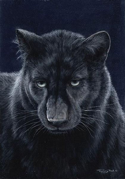 Black Knight - Panther