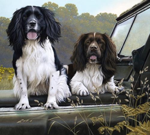 Off Roaders - Springer Spaniels