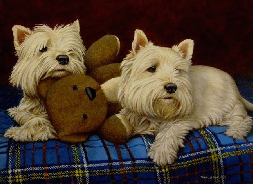 Teddy Boys - Westies