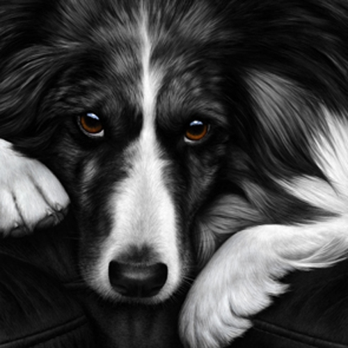 Dog Tired- Collie