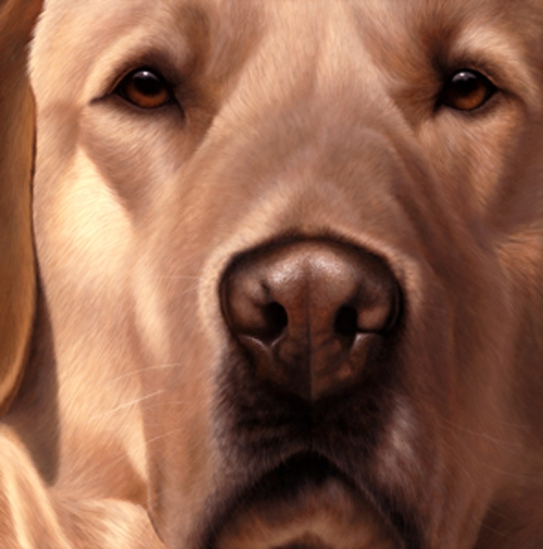 Larger Than Life - Yellow Labrador