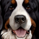 Larger Than Life - Bernice Mountain Dog